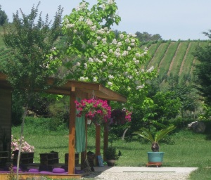 view of vineyards from meditation room